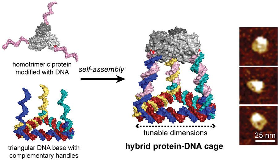 Programmable DNA - Three-dimensional cages