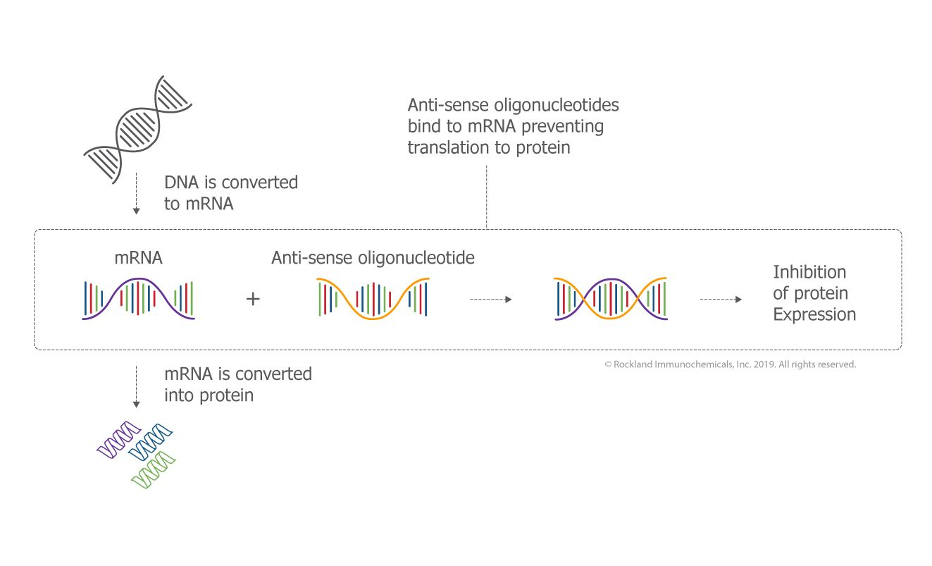 Antisense Oligonucleotides (ASO)