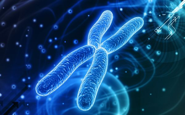 Human Artificial Chromosome (HAC)