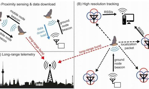 Sensor network for tracking small animals