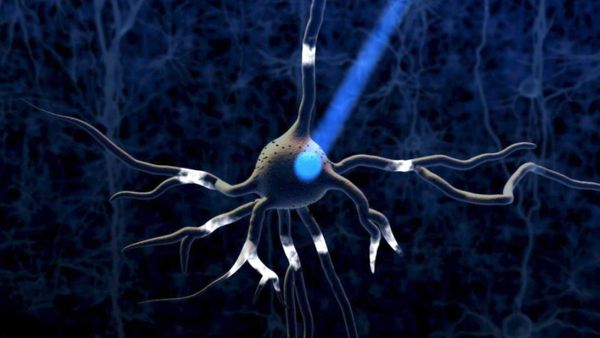 Optogenetics: Light as method for brain cell remote control